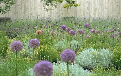 Great Design Plant: Ornamental Allium