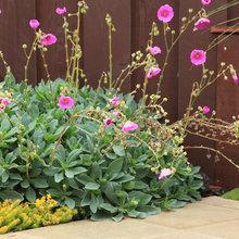 10 Spectacular Flowering Succulents