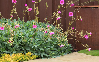 10 Succulents That Make Pretty, Easy-Care Ground Covers
