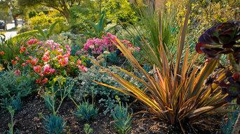 Beverly Grove,   Monet Drought Tolerant Garden -Front Yard