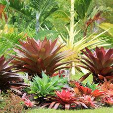 Tropical Landscape by Living Green Design