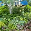 Unsung Garden Hero: Fantastic Foliage