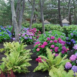 Black Pine, Hydrangea, and Fern Plantings