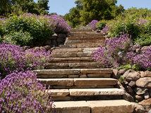 gewusst wie: jetzt einen steingarten anlegen und bepflanzen, Best garten ideen