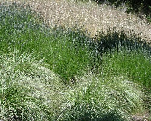 Ornamental grass border houzz for Ornamental grasses for small spaces