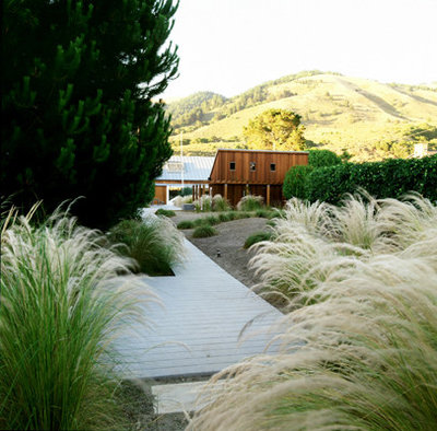 8 ornamental grasses for coastal gardens for Beach house landscaping plants