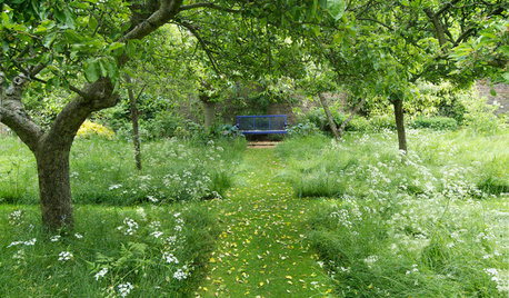 How to Design a Meadow Garden That Loves Shade