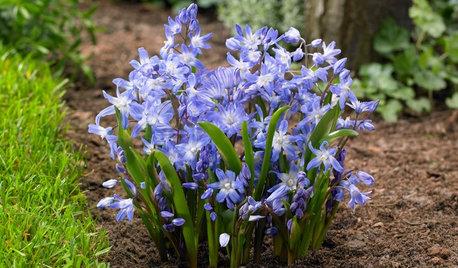 Conseils de pro pour photographier les fleurs de votre jardin