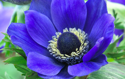 6 Splendid Blue-Flowering Bulbs