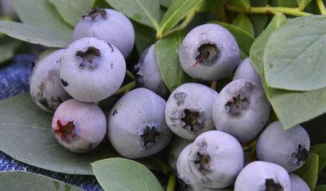 15 Favorites for Your Summer Edible Garden
