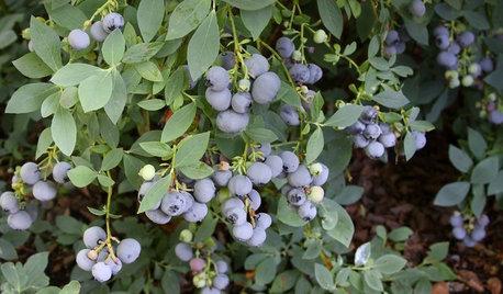 秋から栽培が楽しめる、おすすめの野菜と果樹