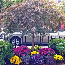 Contemporary Landscape by Amber Freda NYC Garden Design