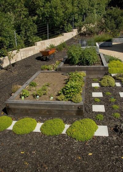 6 Astuces Pour Cultiver Des Legumes Sur Un Terrain En Pente