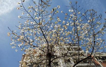 Borrow Garden Ideas From Springtime in Paris