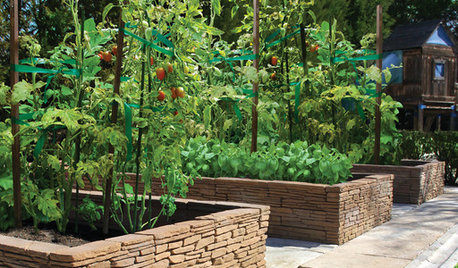 Smart Ways to Support Your Growing Tomato Plants