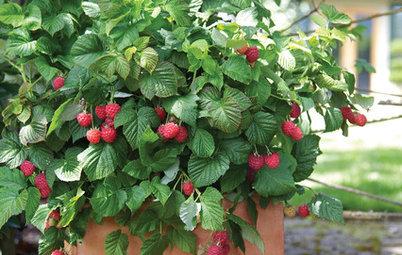 Nasch mich! Die besten kleinen Obstsorten für Balkon und Garten