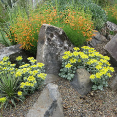 Landscape by Xera Plants