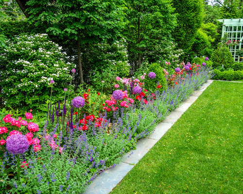 Roses and catmint home design ideas pictures remodel and for Border grasses for landscaping