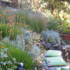 Contemporary Landscape by Dig Your Garden Landscape Design