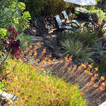 Bulbine frutescens 'Hallmark' (Snake Flower) Marin Gardens