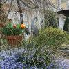 Southeast Gardener
