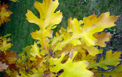 Celebrate Eastern Oaks for Wildlife, Longevity and Seasonal Interest
