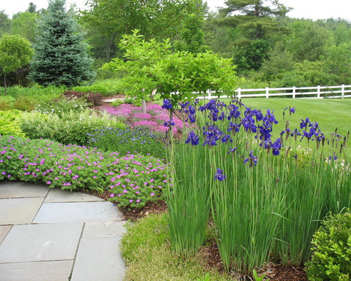 Japanese garden plants houzz for Japanese outdoor plants