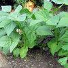 Apprenez à lutter naturellement contre les limaces pour un jardin écolo