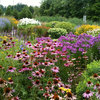 What to Plant Now to Benefit Wildlife in Spring