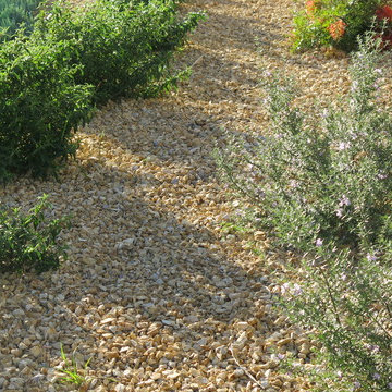 """""""CA Gold"""" Gravel Ground Cover"""