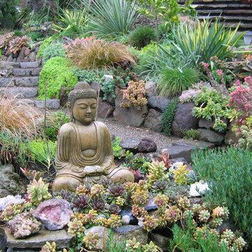 California drought-tolerant garden