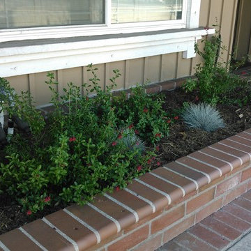 California Native Small Front Yard In Cypress