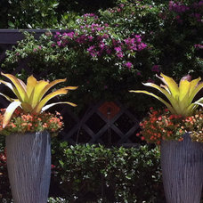 Tropical Landscape Captain's Quarters - Port Royal Residence Transformation