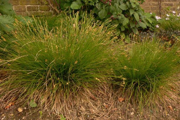 Great design plant carex eburnea for Piet oudolf plant list