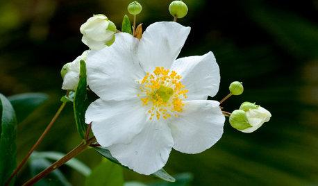 20 White Flowers to Illuminate Your Garden