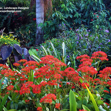 Tropical Landscape by Tampa Landscape Design