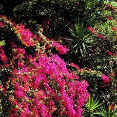 Tropical Landscape by Tampa Landscape Design
