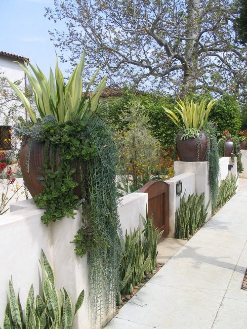 Inspiration For A Mediterranean Front Yard Landscaping In Los Angeles.