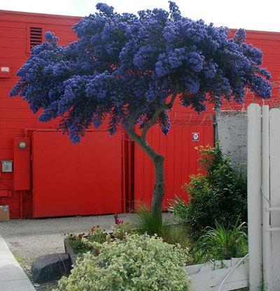 Garden by Pete Veilleux, East Bay Wilds
