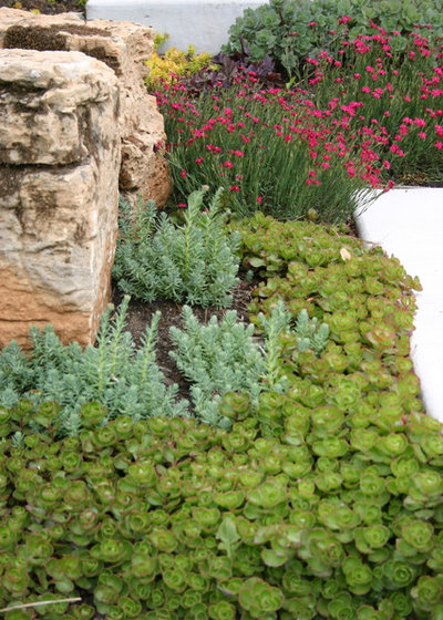 8 Succulents That Make Pretty Easy Care Ground Covers The