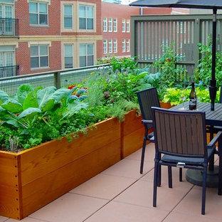 Kleiner Moderner Garten mit direkter Sonneneinstrahlung in Boston