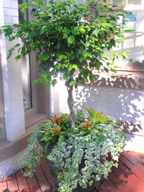 Central Landscape And Garden Drury : Central gardens