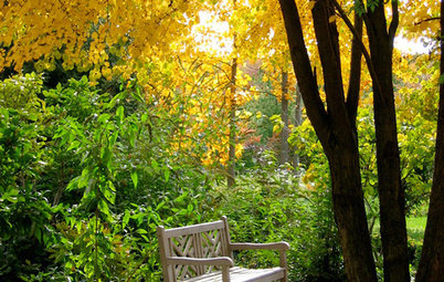 Nature's Color Wisdom: Lessons on Yellow From the Great Outdoors