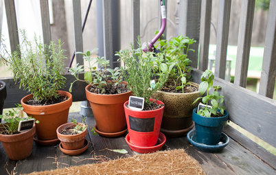 How Do I... Create a Potted Herb Garden?