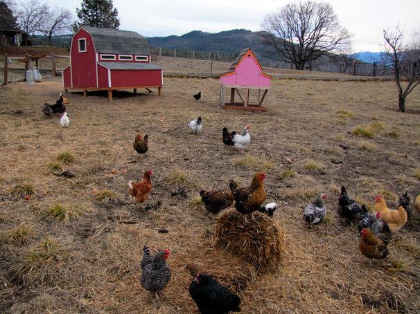Landscape Chicken coops
