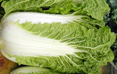 Cool-Season Vegetables: How to Grow Chinese Cabbage