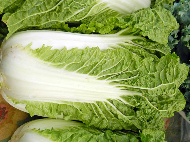 Traditional Landscape Chinese Cabbage