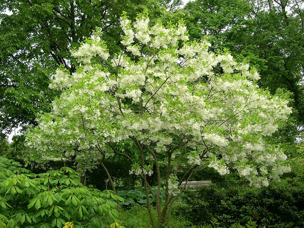 Quel arbuste planter dans un petit jardin for Plante exterieur toute saison