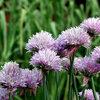 15 plantes comestibles pour un jardin gourmand