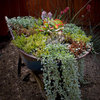10 Ways to Plant Outside the Box
